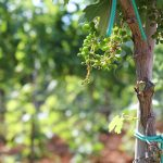 La sostenibilità attraverso l'innovazione. AGRI, il sistema adottato da Tenuta Liliana